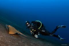 plongeur raie pastenague